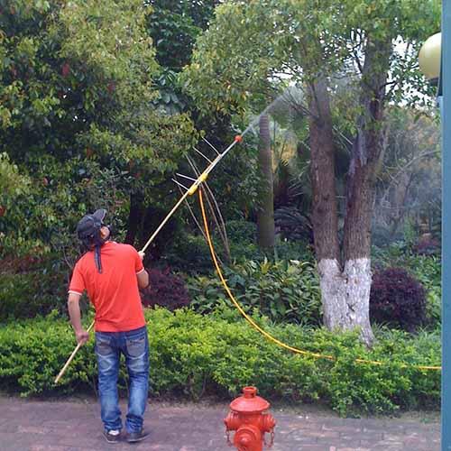 园林白蚁防治服务