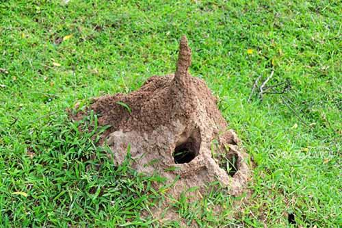白蚁防治:白蚁蚁巢的寻找法