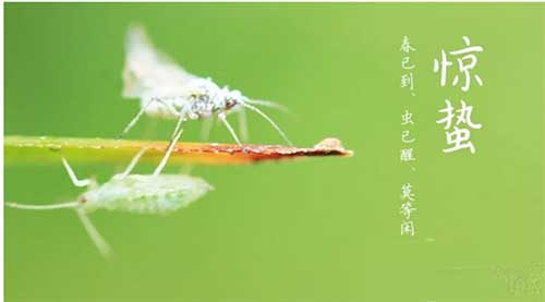 春天已到,需要做好虫害防治工作