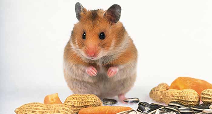 永盛虫控帮助人们有效解决老鼠危害问题