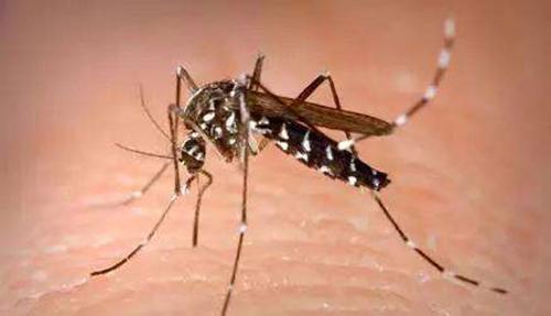 夏日蚊子虫害防治