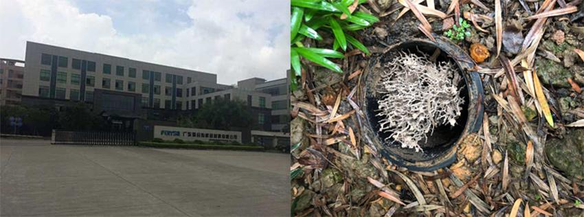 广东聚合有机硅材料有限公司白蚁防治施工服务