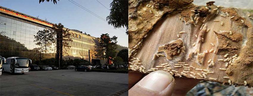 山水电子(中国)有限公司白蚁防治施工服务